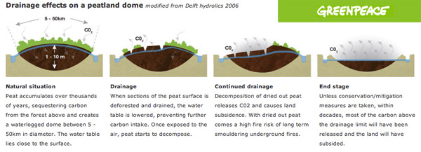 Sustainable Management of Peatland Forests in Southeast Asia ...